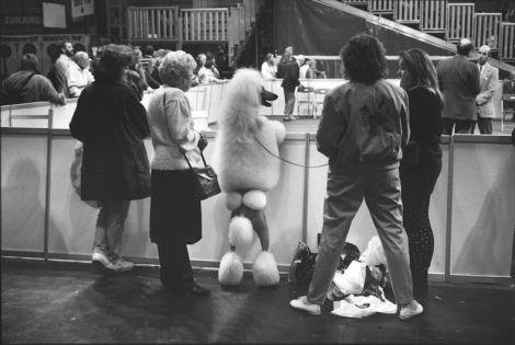 Elliott ERWITT - DOGS - Birmingham Angleterre -1991