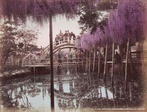 Le pont Kameido et ses glycines en fleurs - Tokyo vers 1880