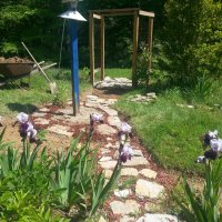GRAPE ARBOR AND BIRD FEEDER