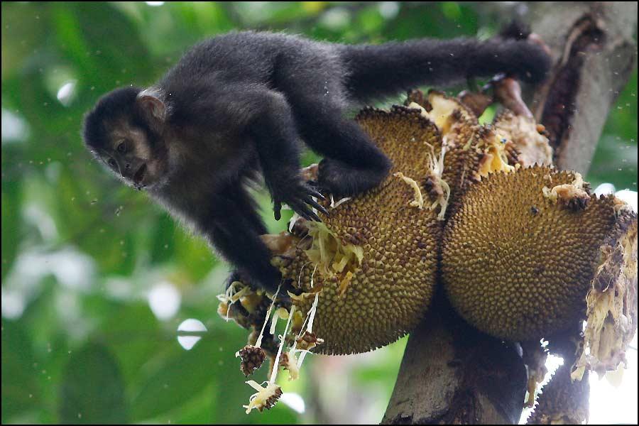 mariage à Rio de Janeiro avec les singes