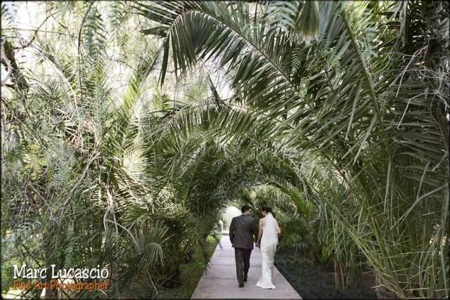 ballade amoureux haie de palmier Marrakech