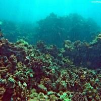 Maui Underwater Photography
