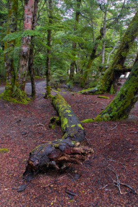 Mavora Lakes National Park, NZ
