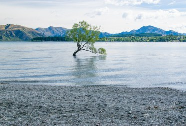The Tree - Lake Wanaka
