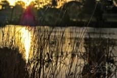 Autumn Sunset--4