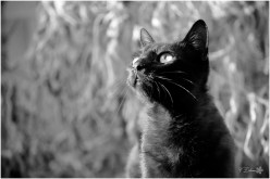 Photo nature - chat noir et blanc