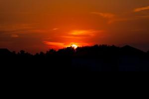 sunset_weeds-1225