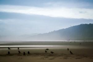 Birds on Pacific Beach, Washington