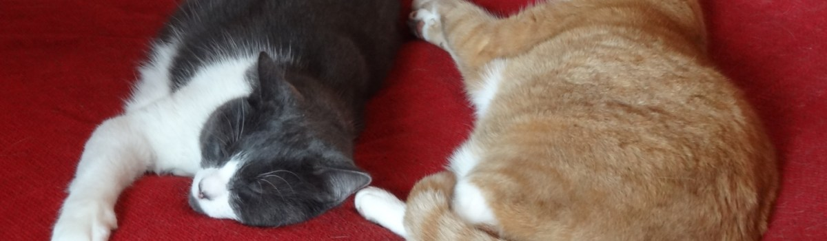 Tigger & Bandit – What Really Goes On!