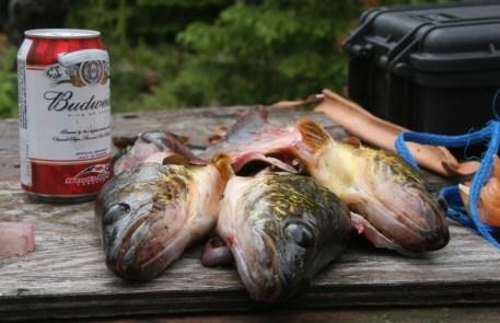 Fish guts