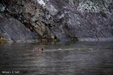 Beaver or Otter