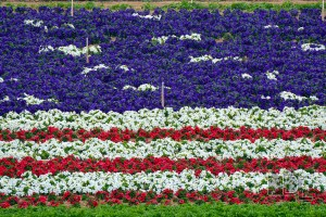Colorful flowers form a flag in The Flower Fields in Carlsbad, California