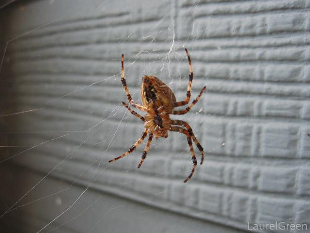 Cross Spider Bottom