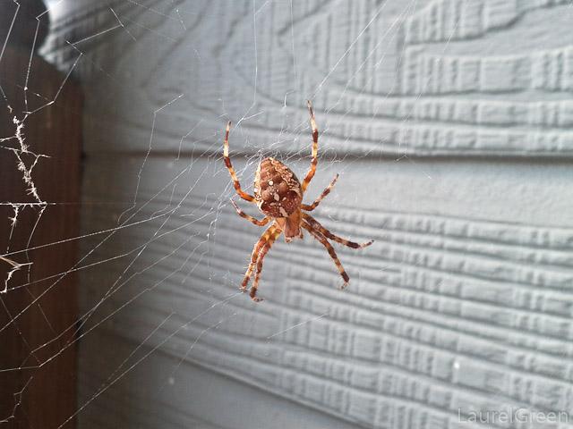 Cross Spider Top