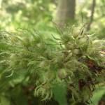 Weird Plant
