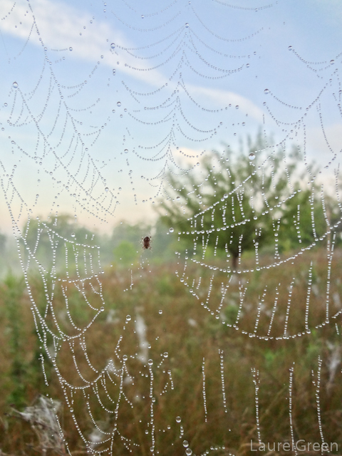 a photograph of a dew-covered web with a spider in the middle