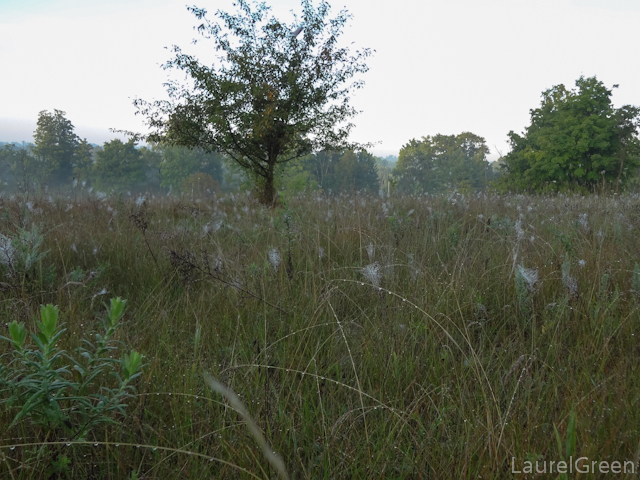 a photograph of a field filled with spider webs