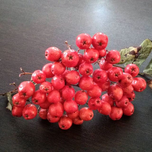 a bunch of rowan tree berries