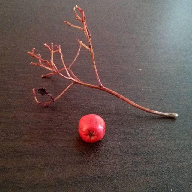 a photo of a rowan twig and berry