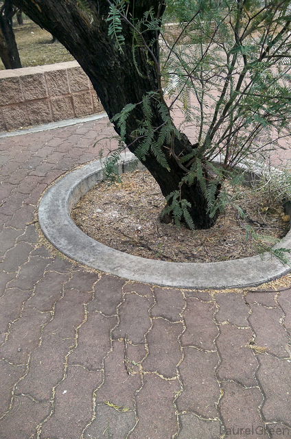 a tree in circular concrete landscaping