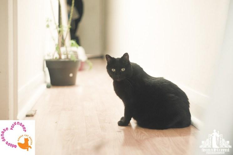 Annex Cat Rescue | Toronto | Vancouver Portrait Photographer