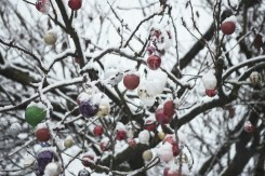 A tree covered in Christmas decorations dusted with snow in Kitsilano on a snowy day in Vancouver BC