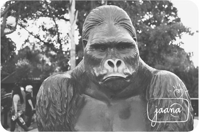 san-deigo-zoo-family-vacation-photographer-12