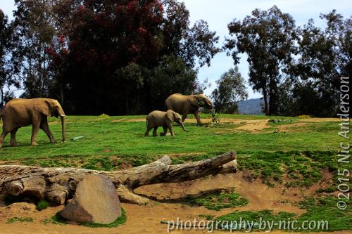 Freaky Details - Elephants