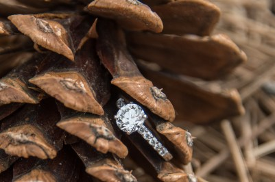 Engagement ring in pinyon pinecone at the South Rim Grand Ganyon