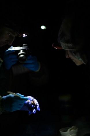 4.25.17 Bat Study Rowell Rd Terri Attridge (15 of 32)