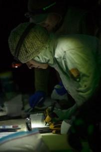 4.25.17 Bat Study Rowell Rd Terri Attridge (9 of 32)