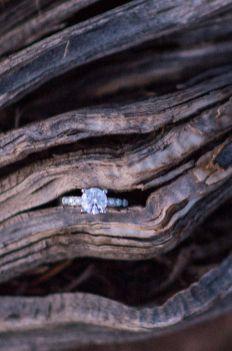 Engagement ring in juniper at South Rim