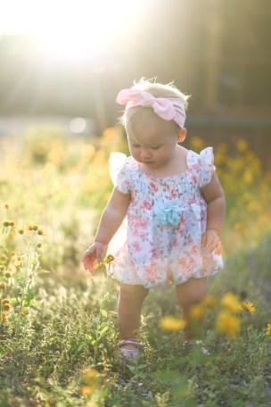 sunflower photos