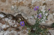 9.1.18 MR Amy and Jessica hike to Horseshoe Mesa photography by Terri Attridge-103