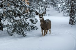 2.22.19 MR Grand Canyon in Snow photography by Terri Attridge-4