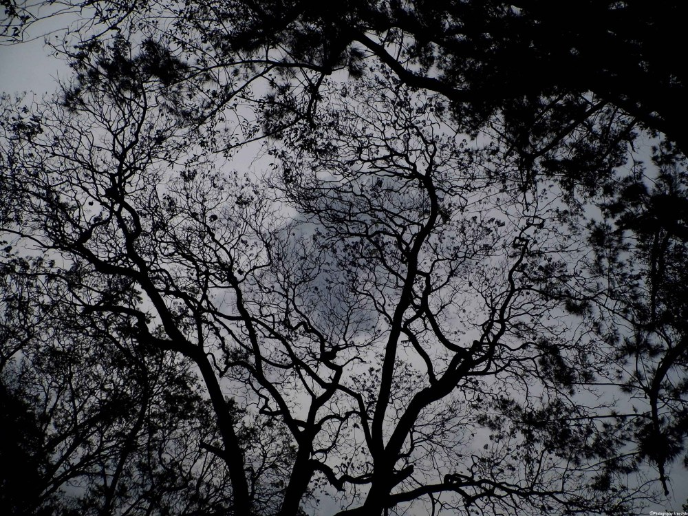 Shadows Of The Trees (2/6)