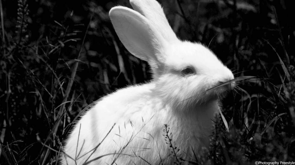 The Little white Bunny (2/5)