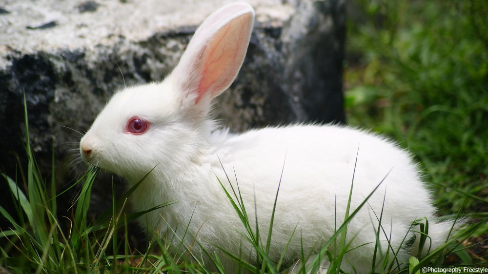 The Little white Bunny (4/5)