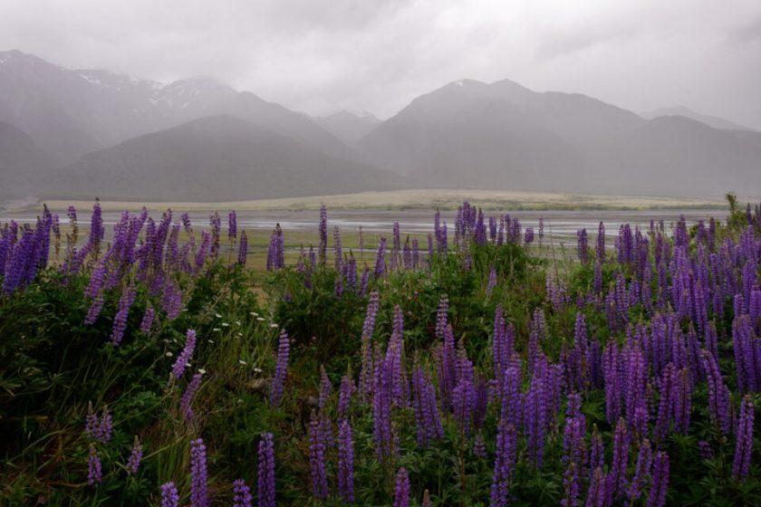 Rainy Landscape in New Zealand
