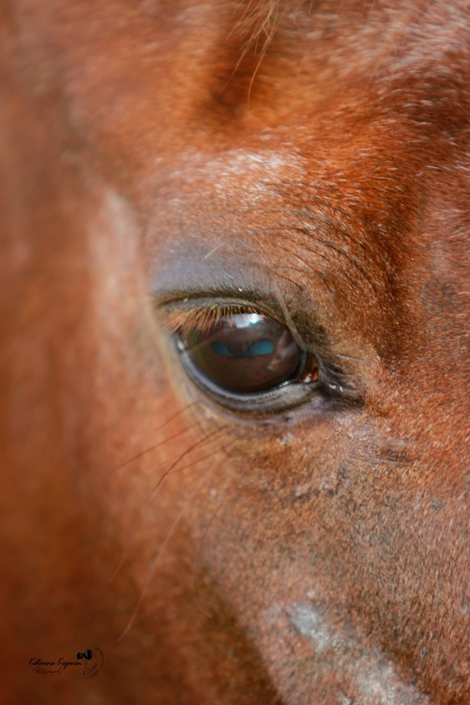 Horses photography and animal portraits outdoor and at your house