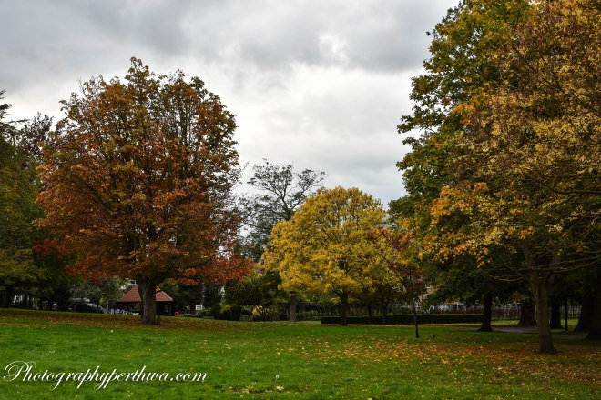 AutumnWaterTowerPark