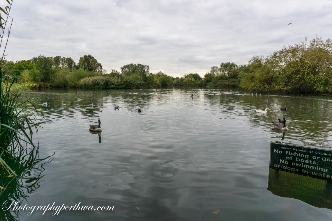South Norwood Park, wetlands