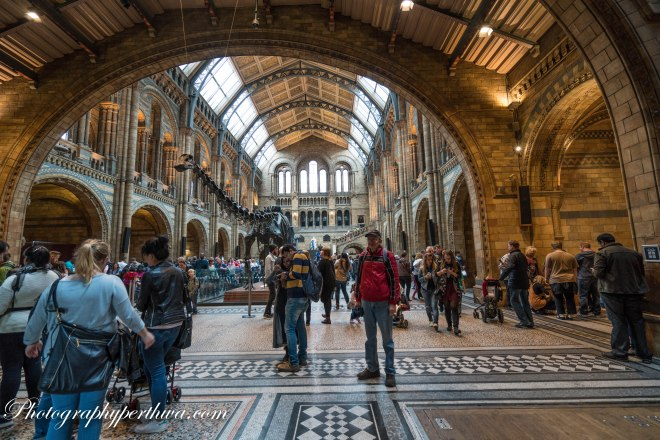 Stephen at the Natural History Museum, London