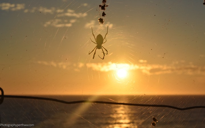 spider-sunset-1-of-1