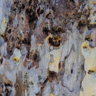 Pitted tree trunk-closeup (1 of 1)