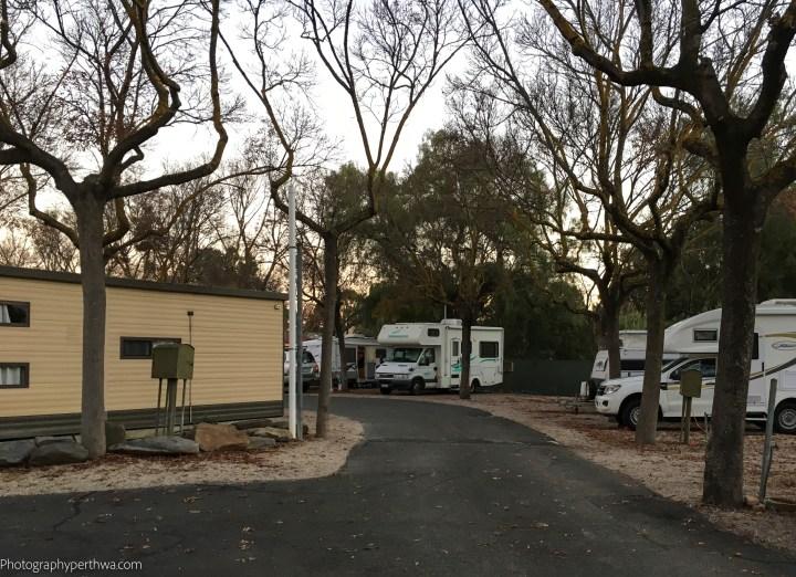 Winnie at our Caravan Park, Hackney, Adelaide, SA (1 of 1)