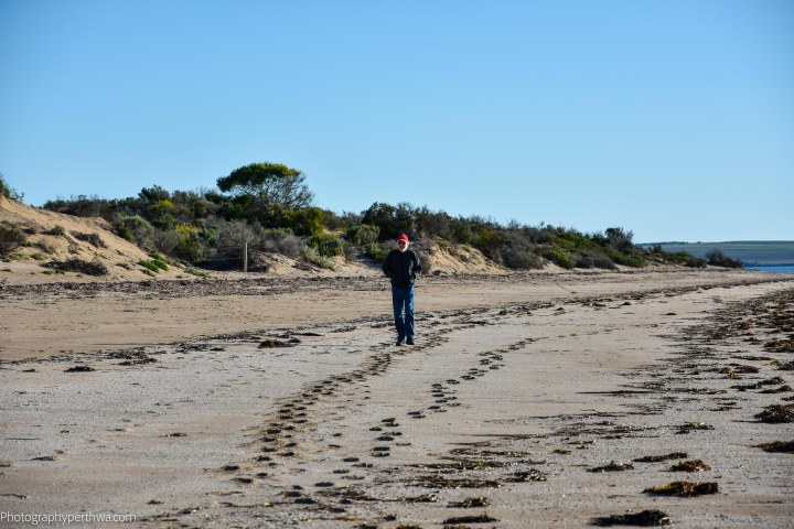red capped wanderer at Streaky Bay (1 of 1)