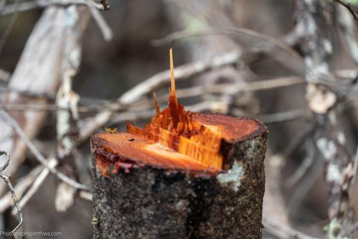 cut wood (1 of 1)