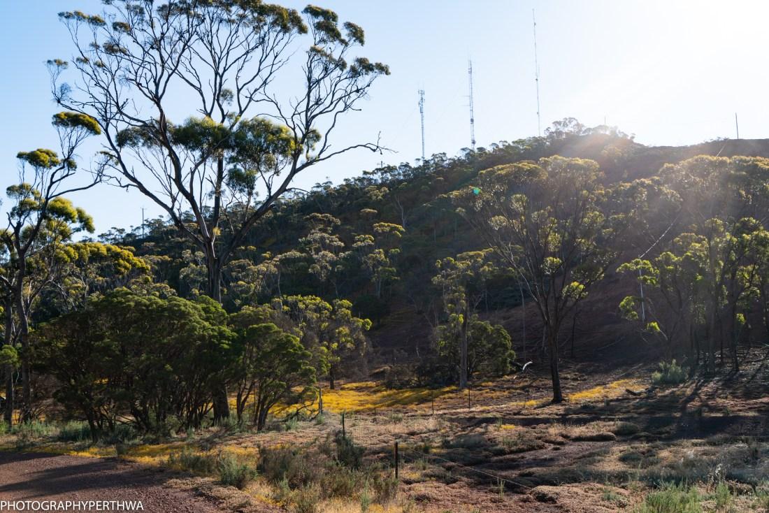 Mt O'Brien view5 (1 of 1)