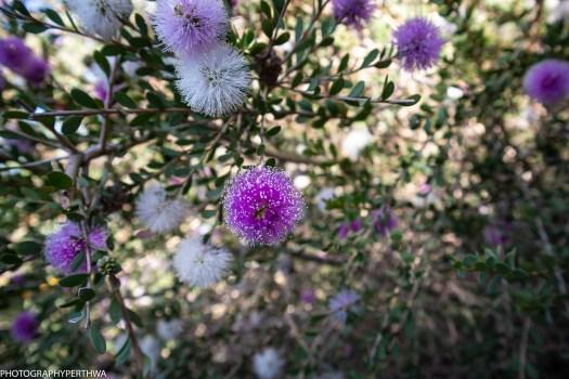 blooming (1 of 1)